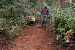 Example of finished new trail at Cougar Mountain. Photo by Mike Hardy.
