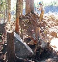 Glacier Basin stump removal