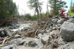 Glacier Basin trail before