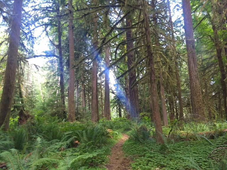 A section of trail heading through green forest with a beam of light coming through the trees. Photo by Anna Roth.