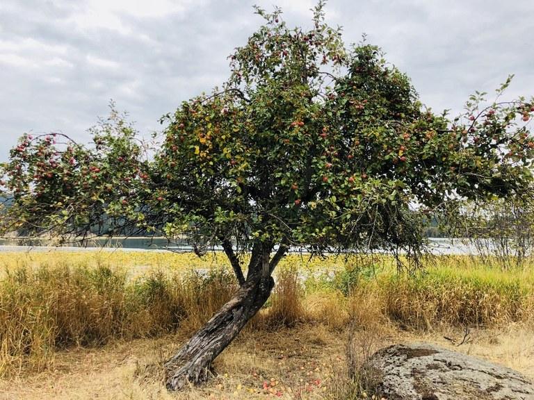 McKenzie Conservation Area Photo by TrailKat.jpeg