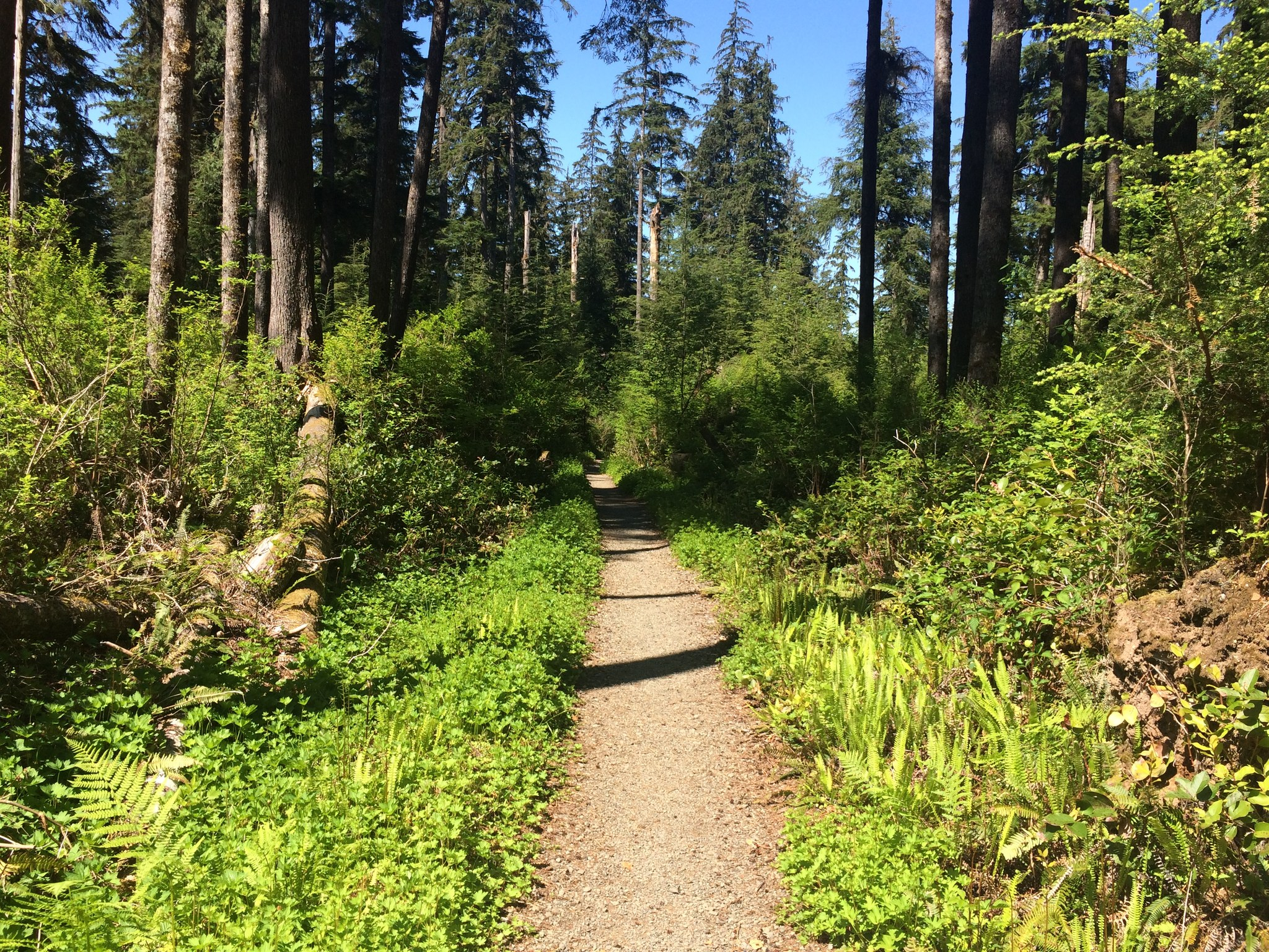 Quinault Natinal Recreation Trails by Rachel Wendling.jpeg