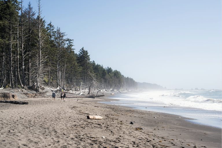 A long look down the stretch of sandy beach flanked by windswept trees on one side and ocean spray on the other. Photo by KatieJM.
