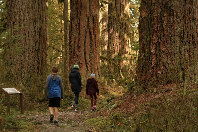 An adult and two younger children walk beneath old growth trees with an interpretive sign next to one tree. Photo by Tiger Hiking
