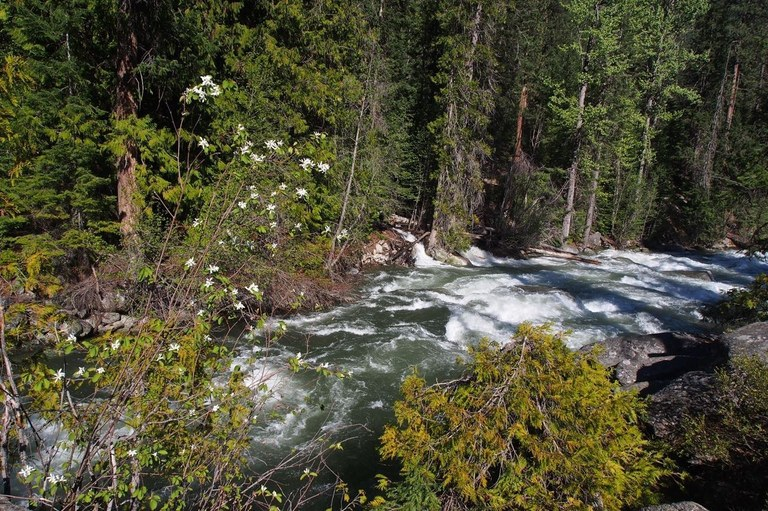 A rushing river flowing through a sunny opening in the forest. Photo by Bob and Barb