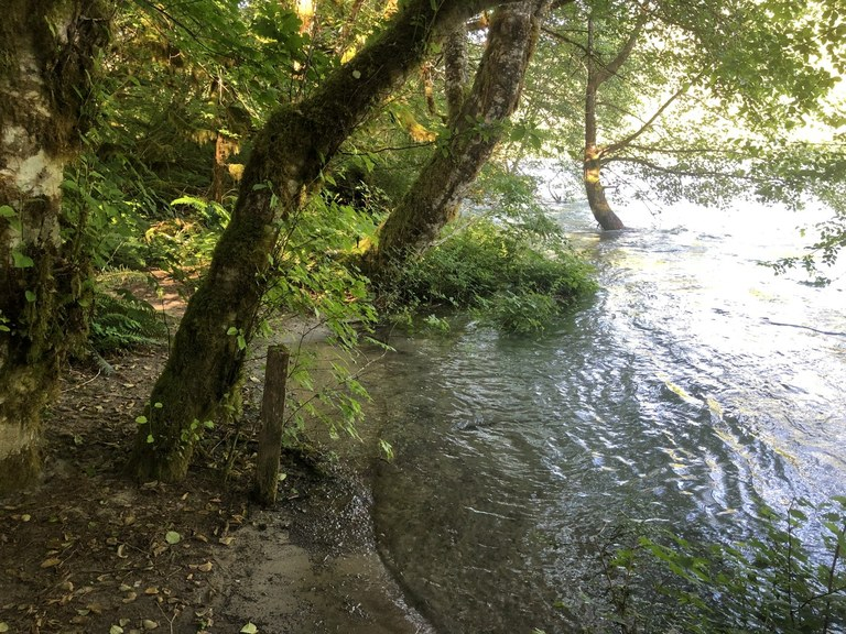 A small patch of beach along the forested bank of the Skagit River. Photo by SnohJoe.