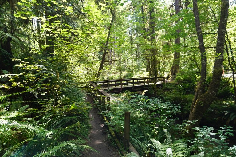 A stretch of boardwalk winding through green and mossy forest. Photo by Doris Wang.