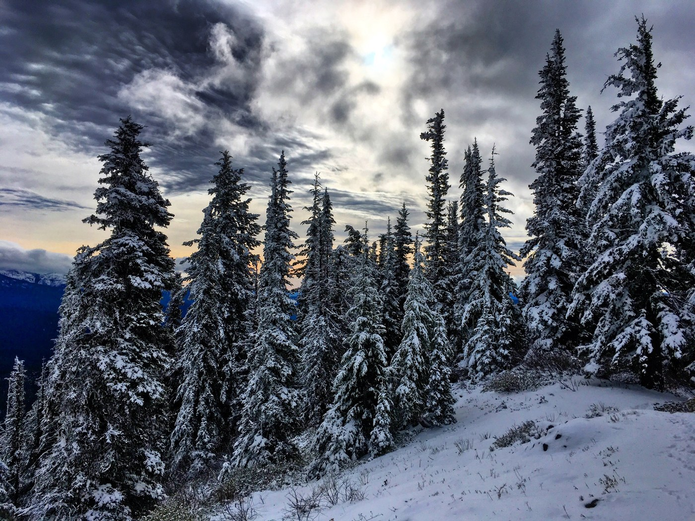 Snow capped trees in the Teanaway.