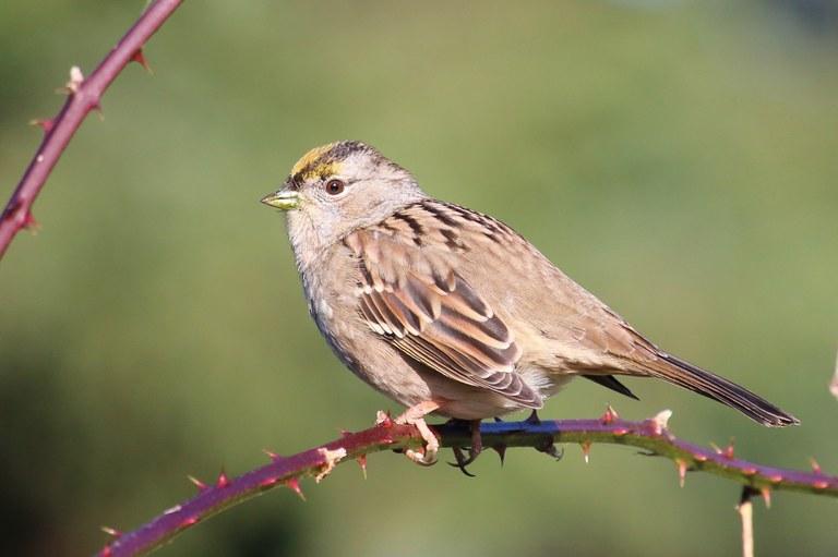 A small brown bird.