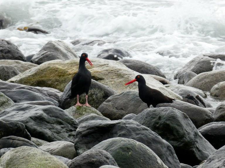 Birds on rocks on the edge of the ocean.