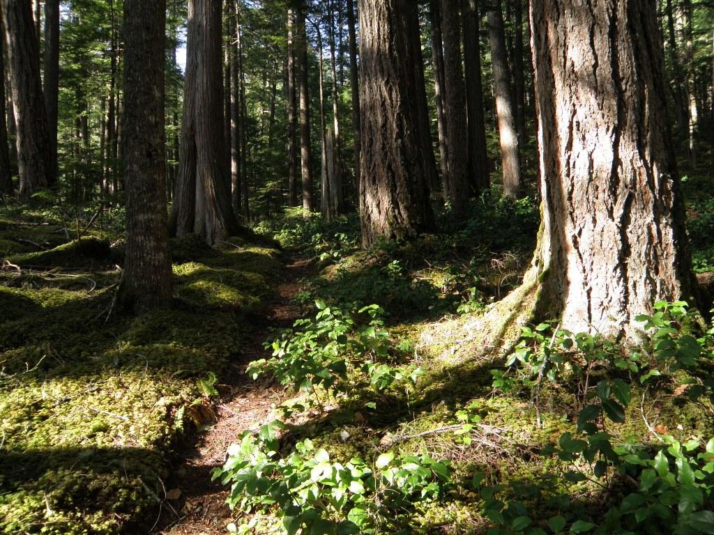 Bigfoot and Batsquatch: Find Washington's Mysterious Creatures on These Trails — Washington Trails Association
