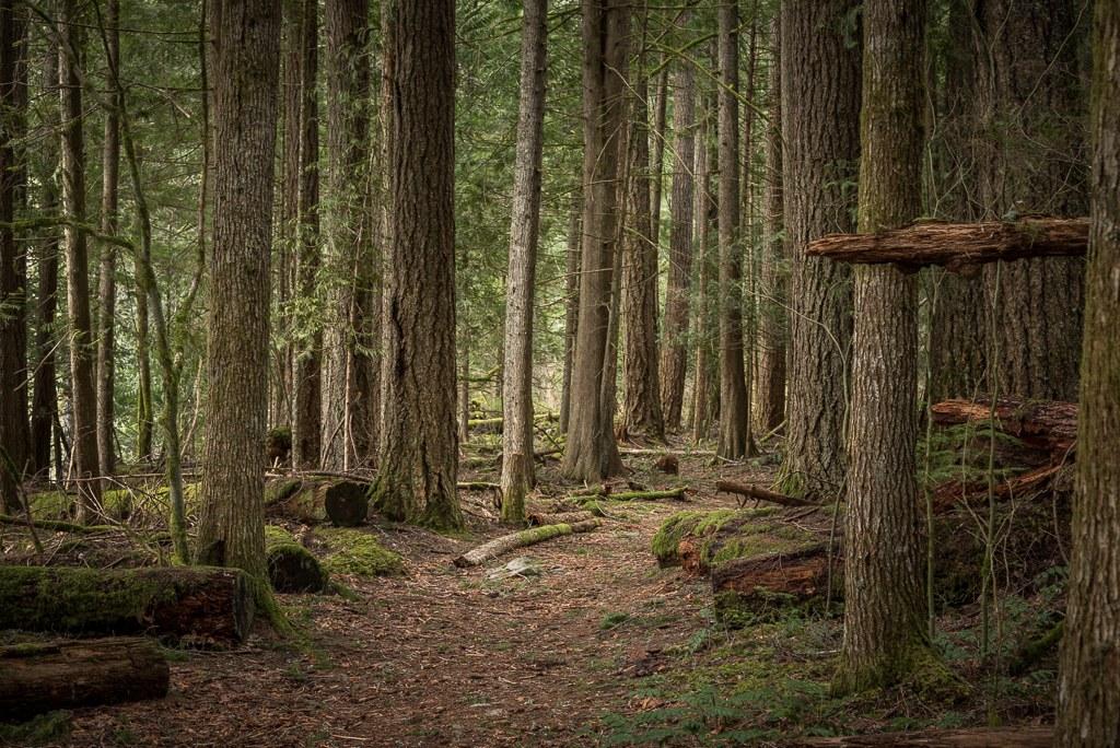 Federation Forest by Marley..jpeg