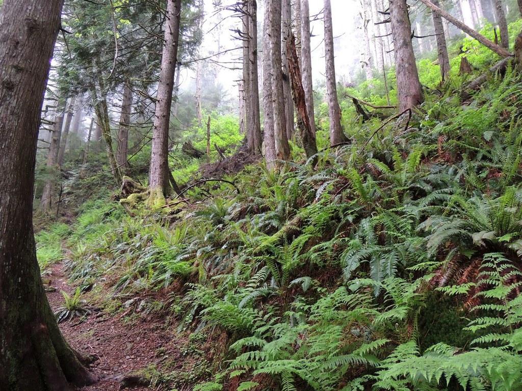 Neiderprum Trail-5.15.2015-geezerhiker.jpeg