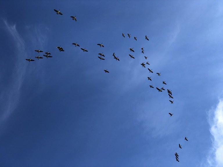 Several birds in the sky.