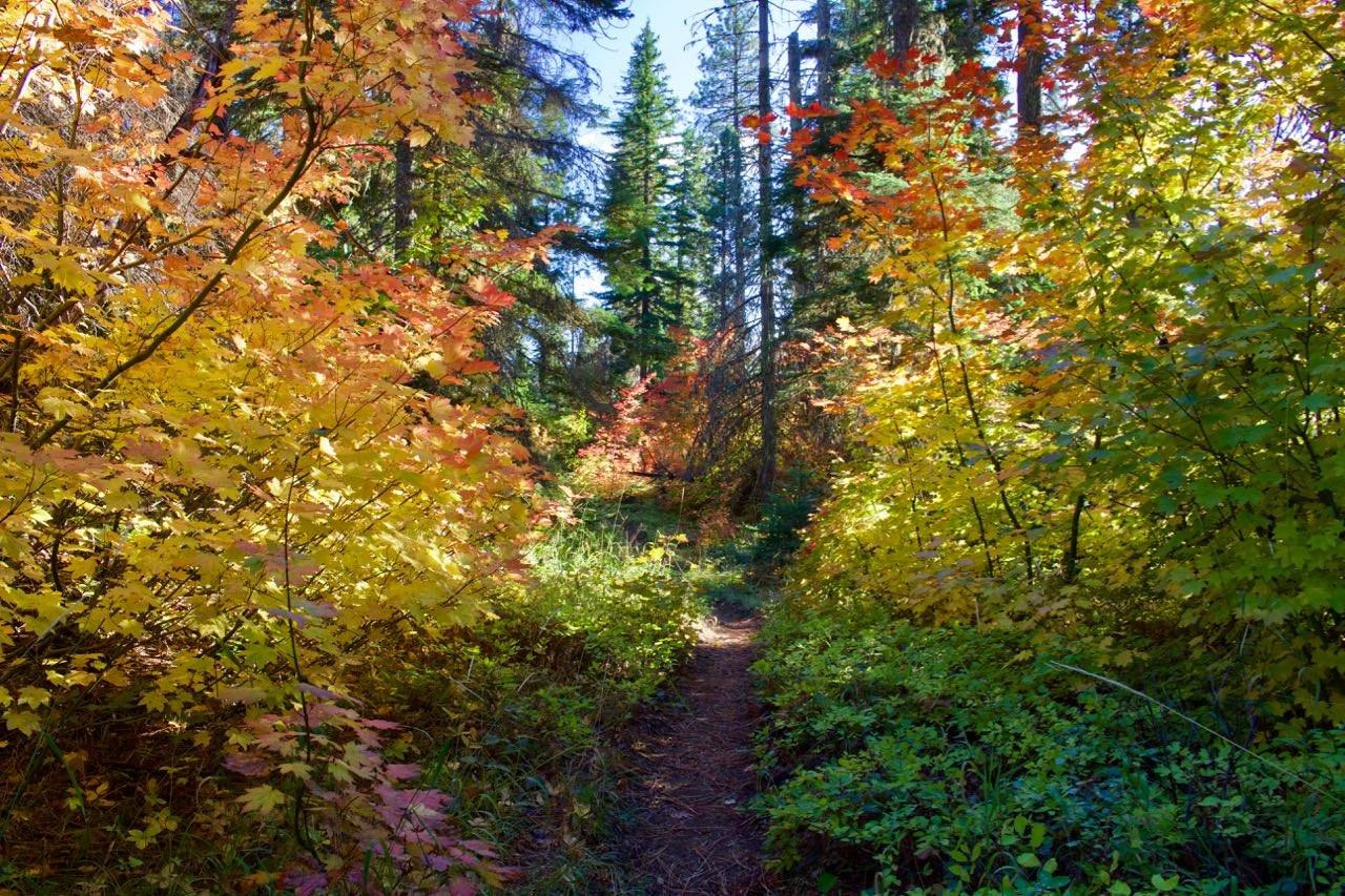 Dense fall foliage along the Wicky Creek Trail.