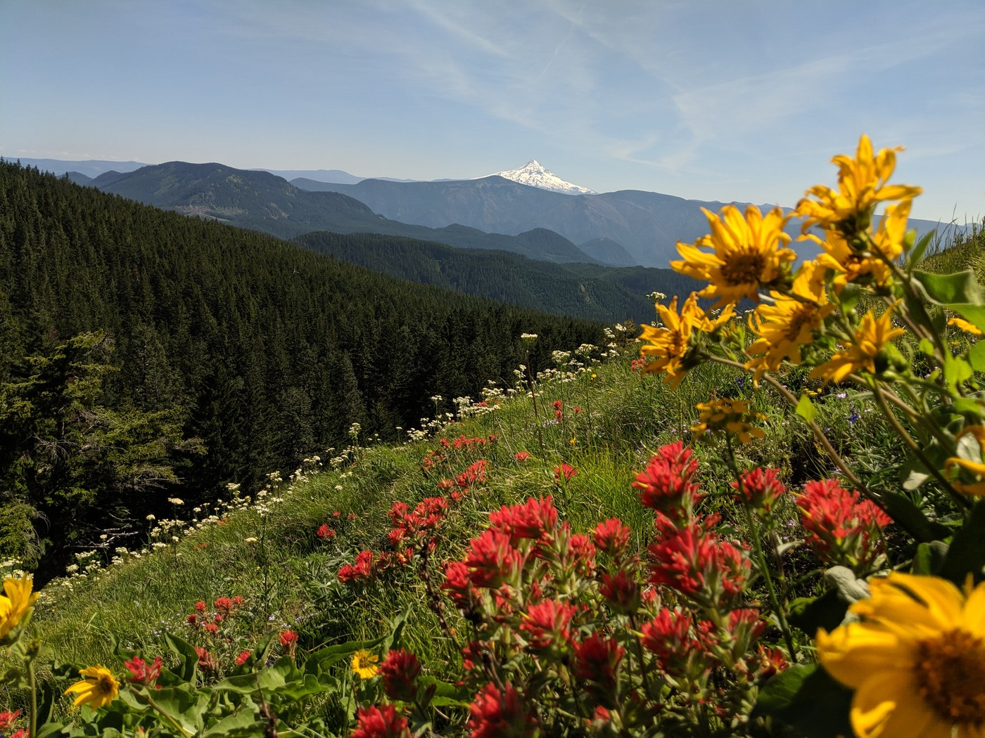 Big Huckleberry Mountain. Photo by cptf..jpeg