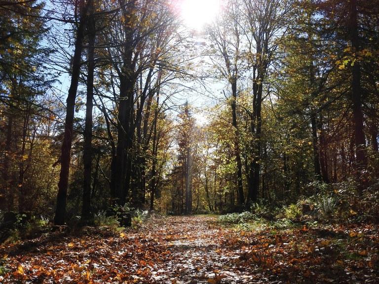 Falling leaves at Soaring Eagle Pakr. Photo by Pribbs.