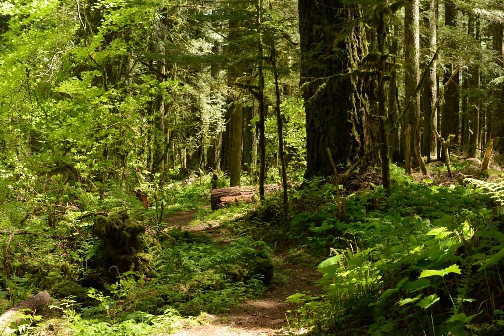 Federation Forest State Park_5.21.2017_Rachel Wendling.jpeg