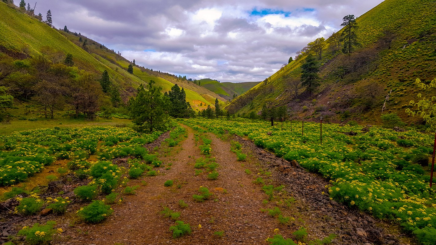 Klickitat Rail Trail by Jarv..jpeg