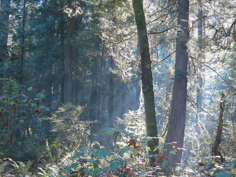 Misty morning at Bridle Trails State Park. Photo by wafflesnfalafel.