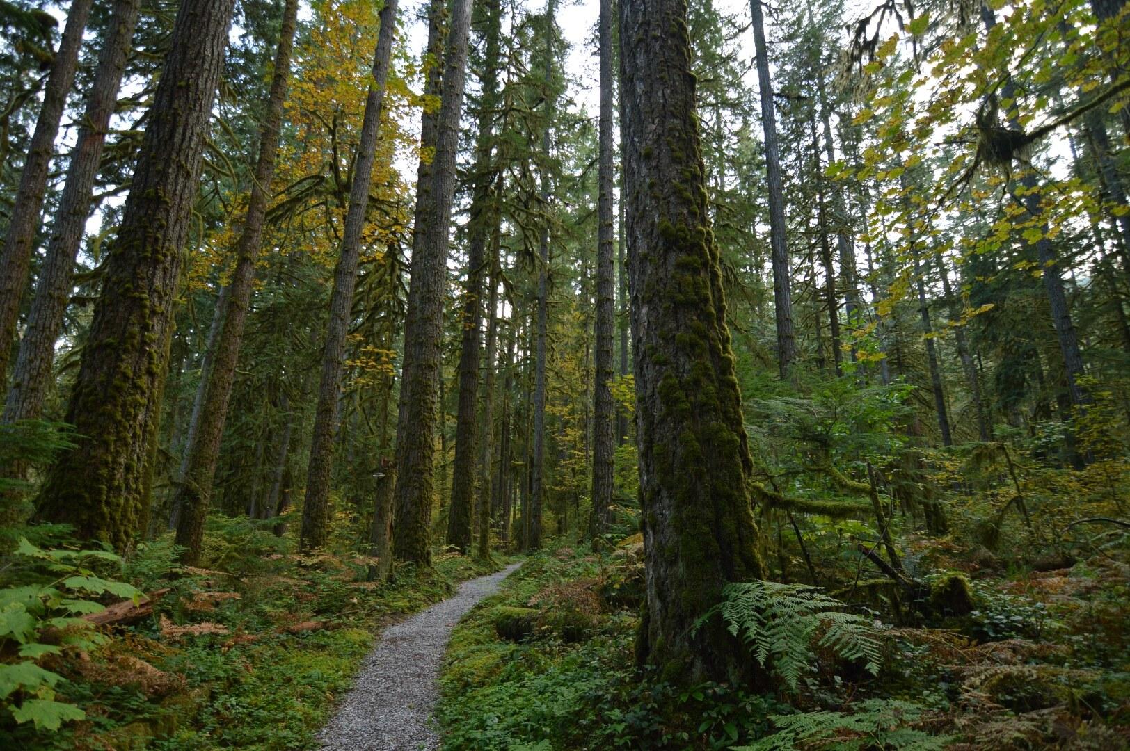 Old Sauk Trail. Photo by Jon Lee..jpeg