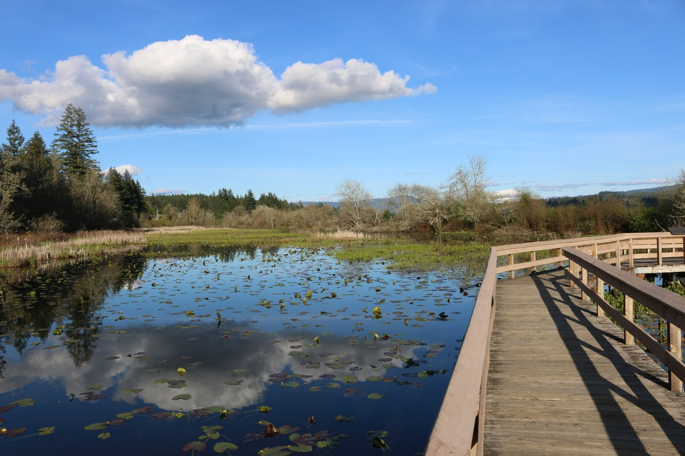 The boardwalk at Seaquest State Park. Photo by Eric & KJ.