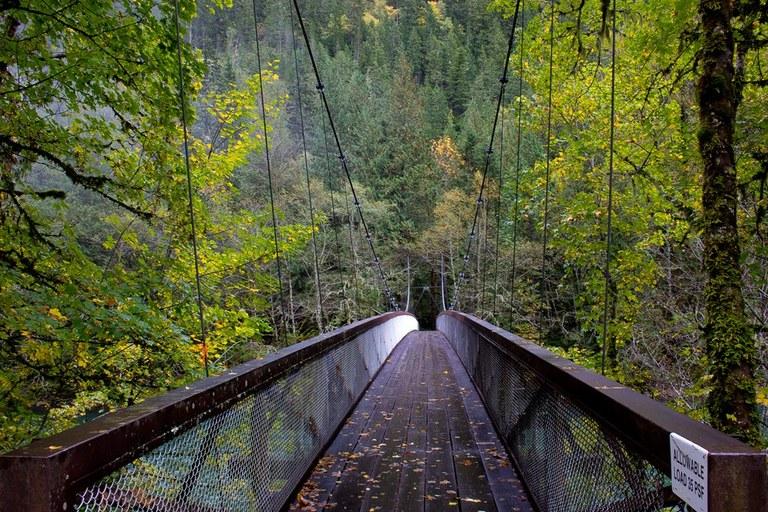 Trail of Cedars by Alistair.jpeg
