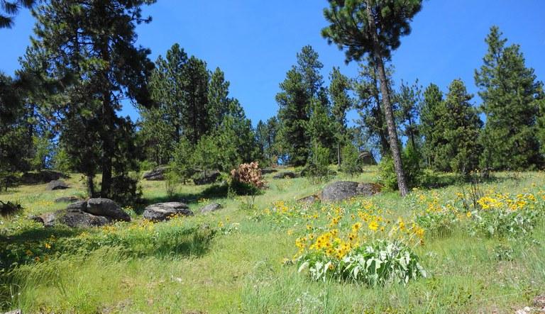 Wildflowers at Antoine Peak Conservation Area. Photo by Daniel Y.