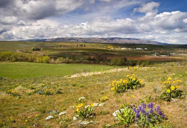 Wildflowers+&+Mt+Cleman,+Wildflower+Trail,+Snow+Mtn+Ranch+Photo+(c)+David+Hagen.jpg