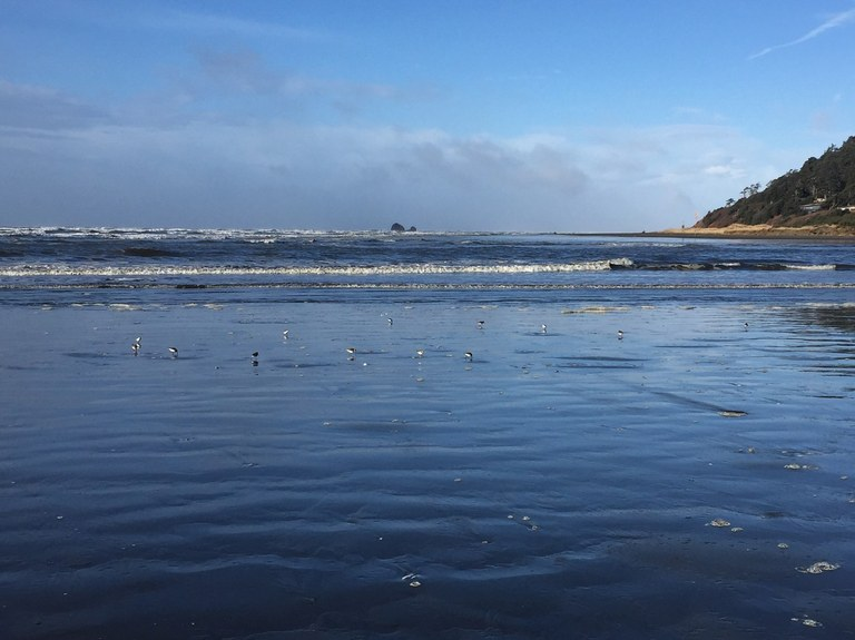 A gathering of birds on the beach at low tide. Griffiths-Priday State Park. Photo by naturegirlangie.