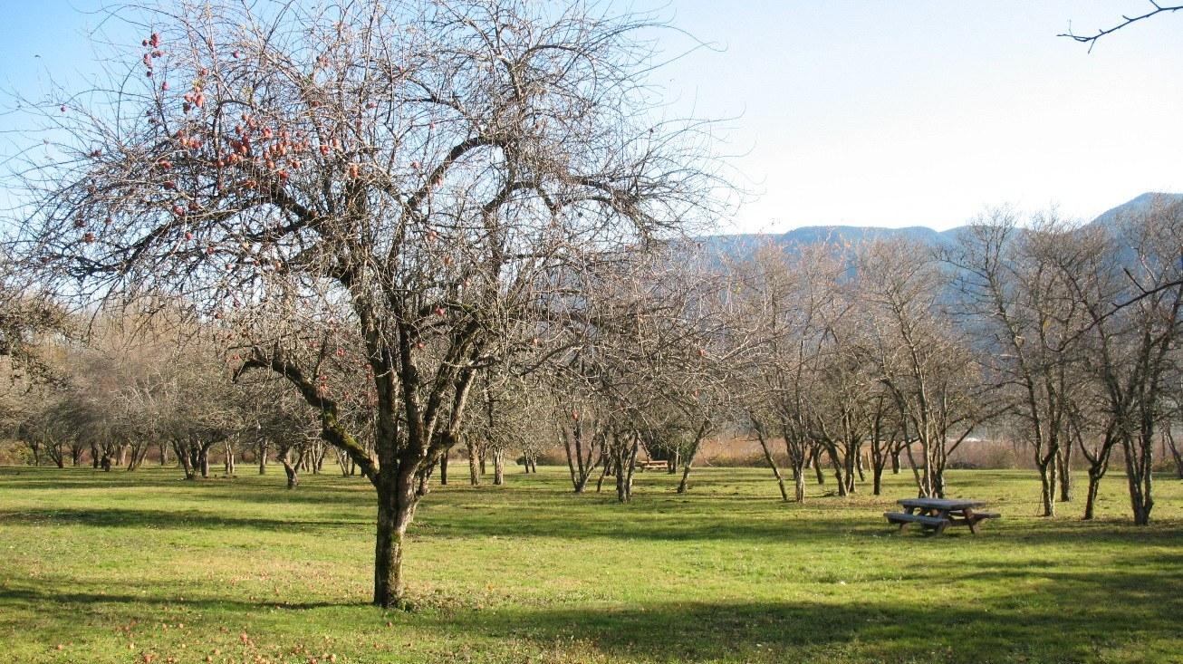 apple orchard at St. Cloud_ryanojerio.jpeg