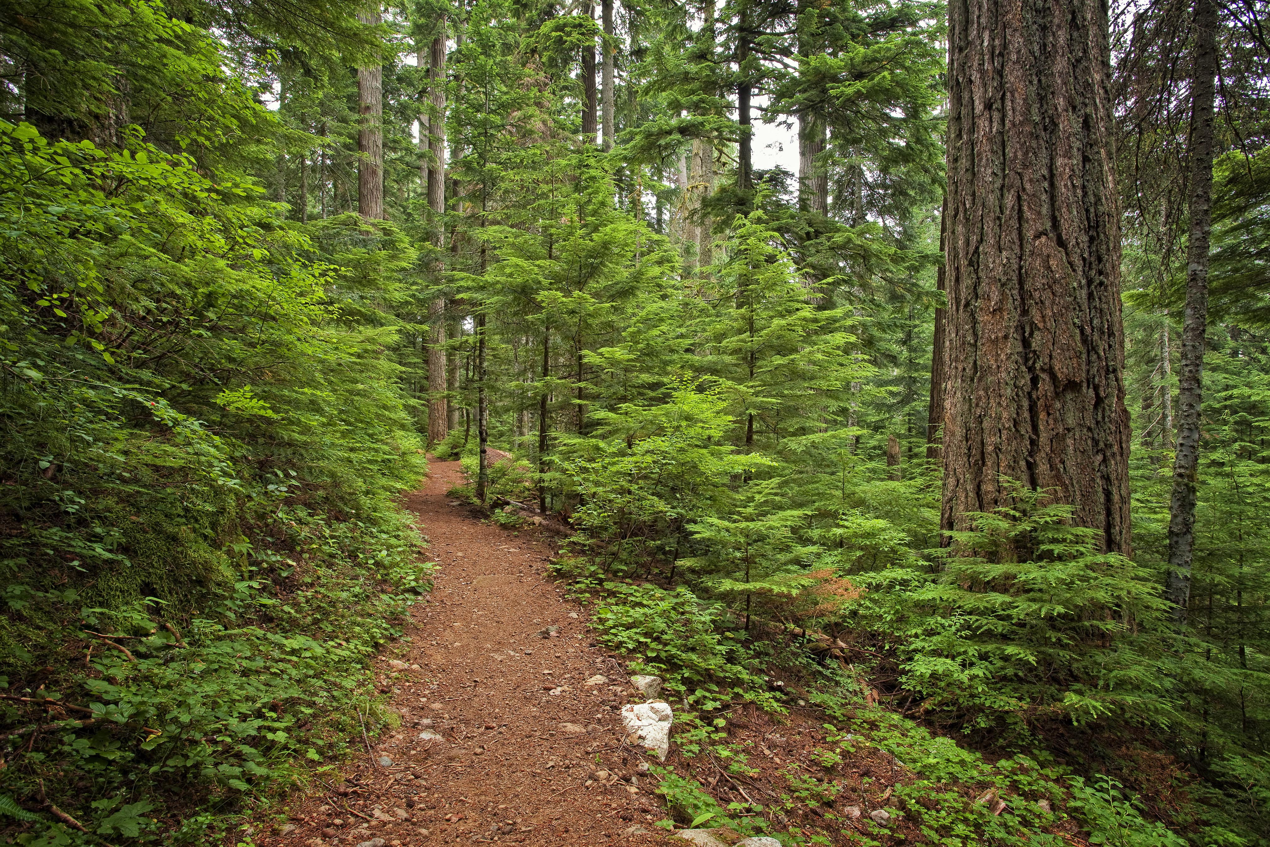 Asahel Curtis Nature Trail-8.7.2010-Aaron Bates..jpg