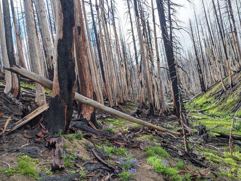 A section of trail runs through a burned forest. Photo by Owen Vogeli.