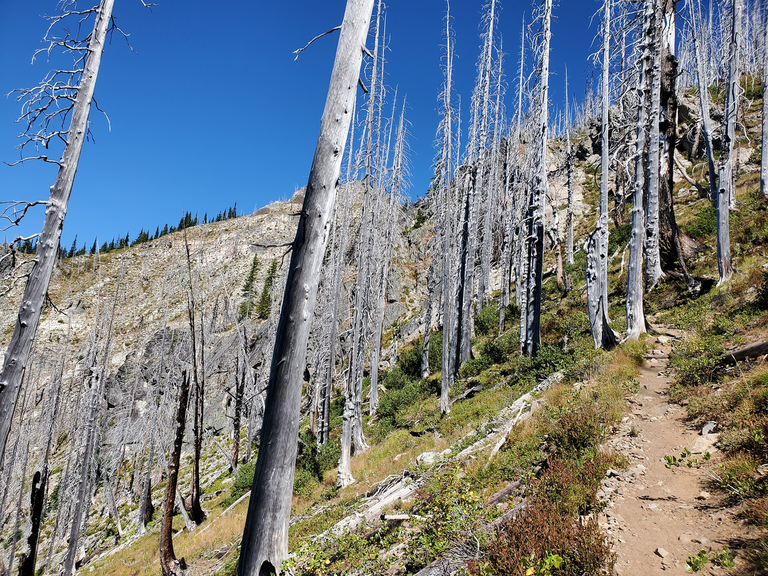 A dusty hiking trail travels uphill through a sparse forest of burned tree trunks. Photo by JWint206