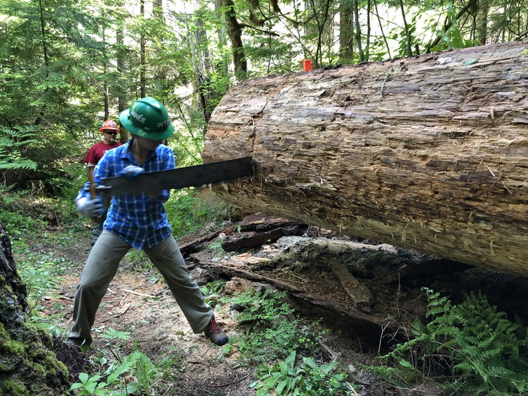 A volunteer uses a crosscut saw to cut through a large tree that had fallen over the trail. Photo by Karen Bean.