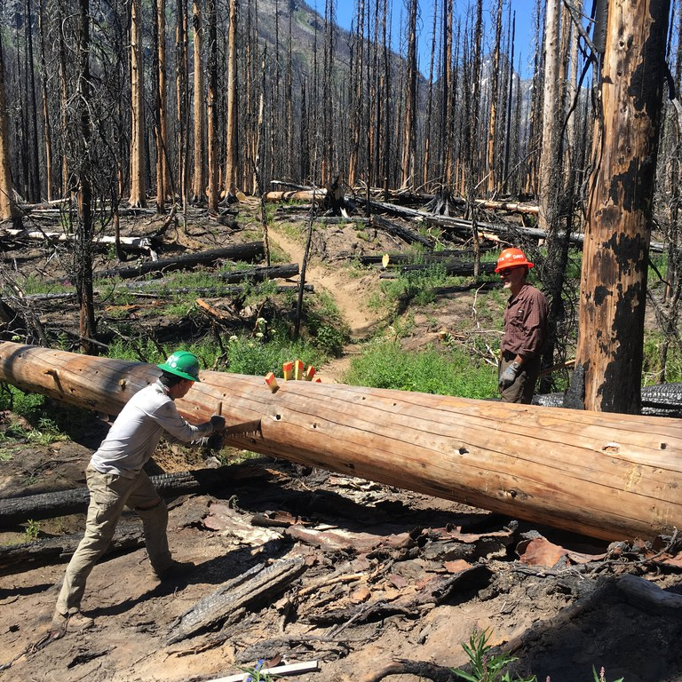 A crew works to cut a fallen tree out of the trail surrounded by burned trees from a wildfire. Photo by Marla Martin.