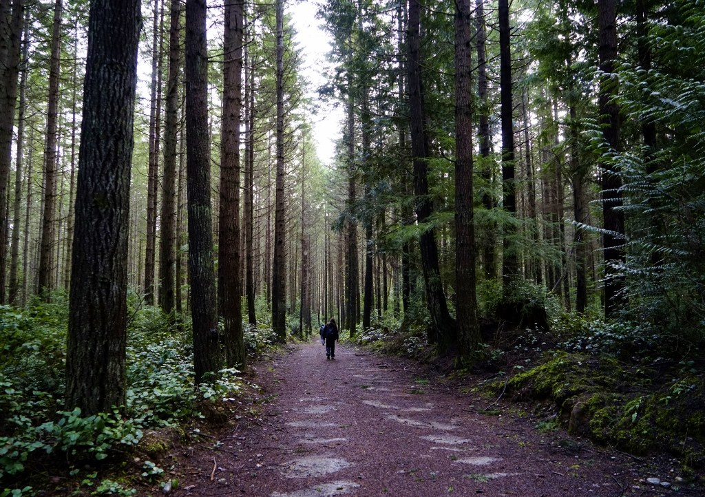Forbidden Forest Trail. Photo by j. irwin.