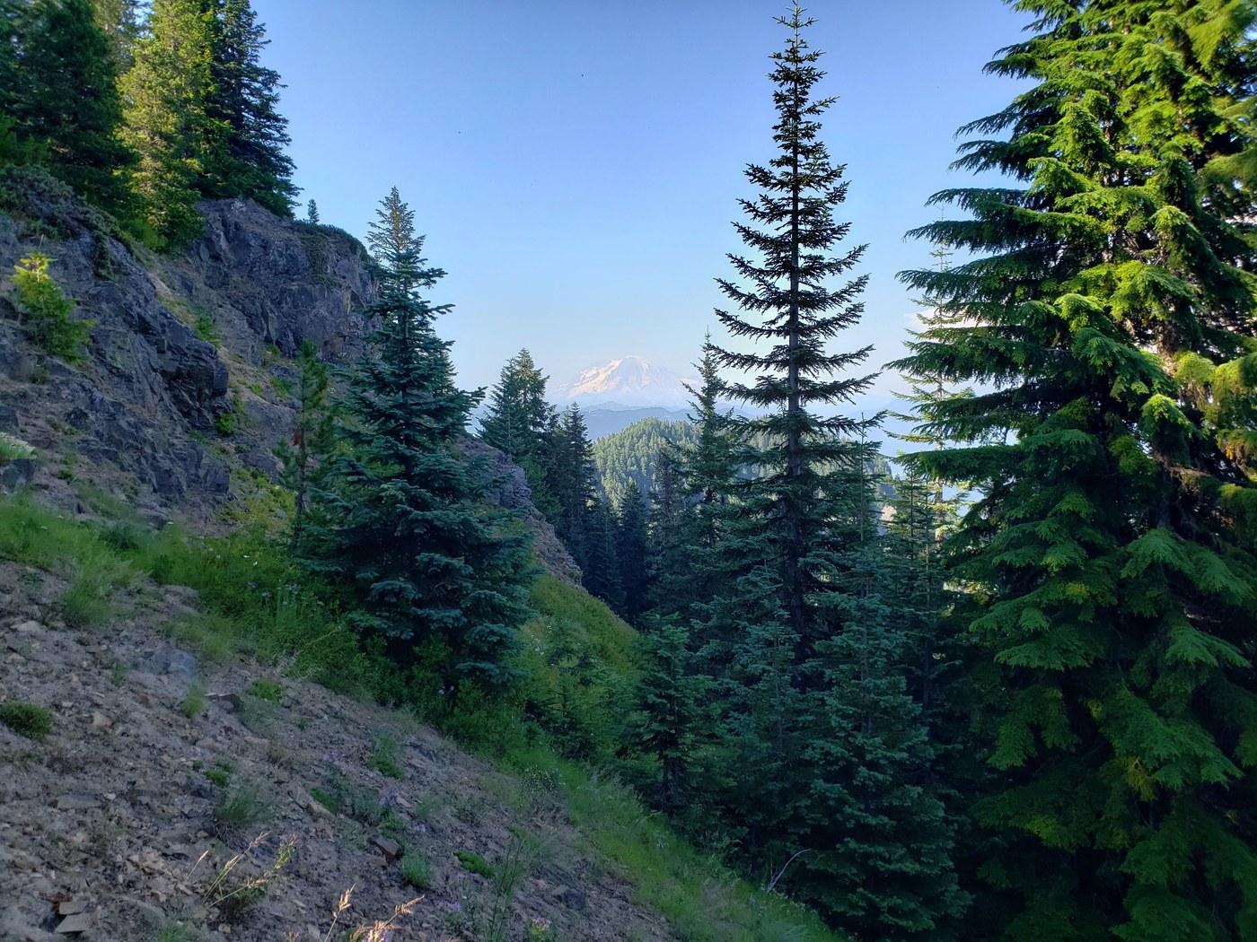 A view of Rainier through the trees.