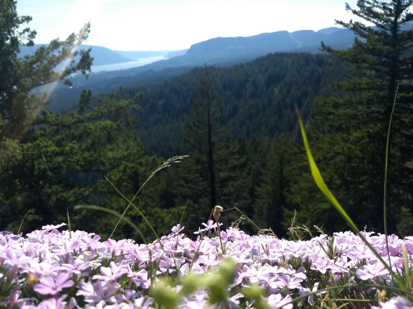 Hamilton Mountain. Photo by nwroth..jpeg