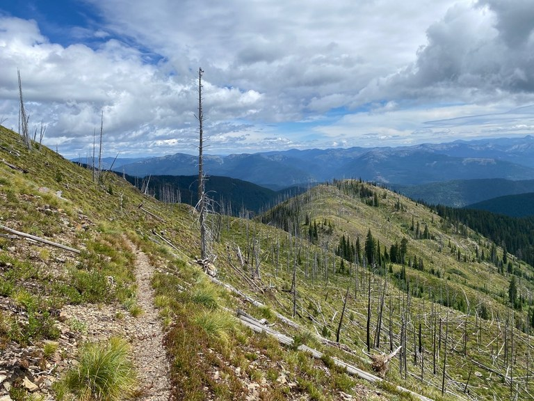 A trail winds through burned trees with a view down to the valley. Photo by JamieR