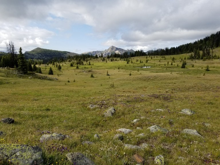 A green grass meadow with a rocky peak in the distance. Photo by Wild Side.