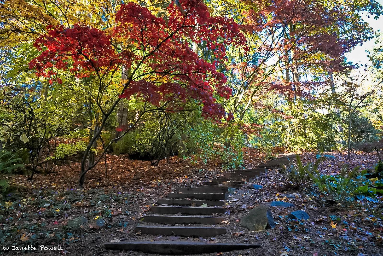 Washington Arboretum