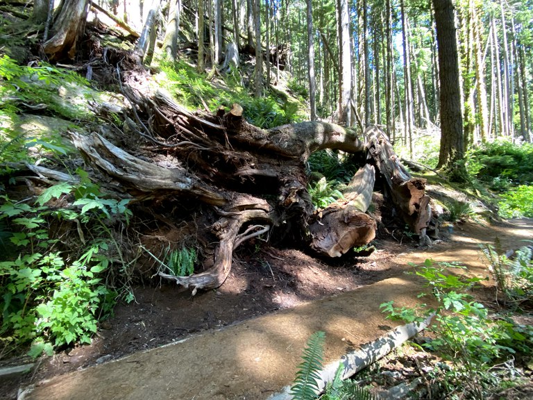 A section of improved trail sits in the shady forest on the Pratt River Trail. Photo by Emily Snyder.