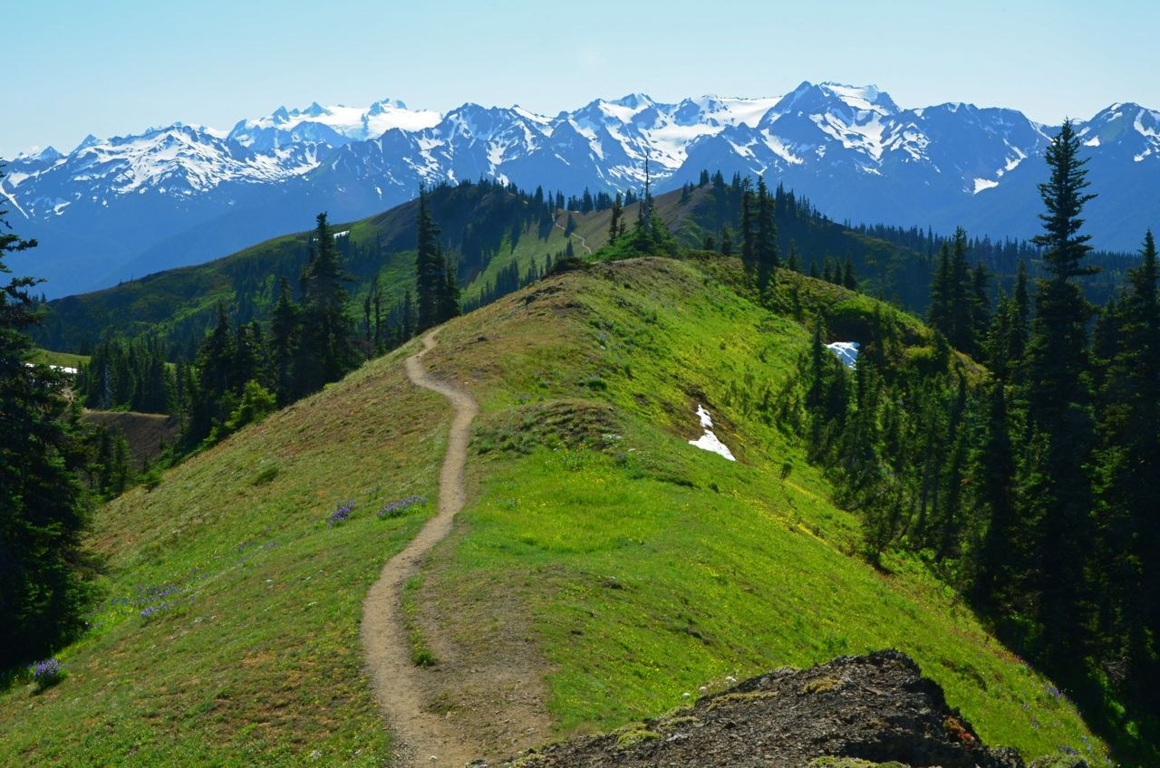 Klahhane Ridge by Bob and Barb.jpeg