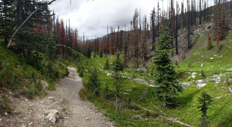 A segment of trail runs through a burned forest. Photo by happy chappy.