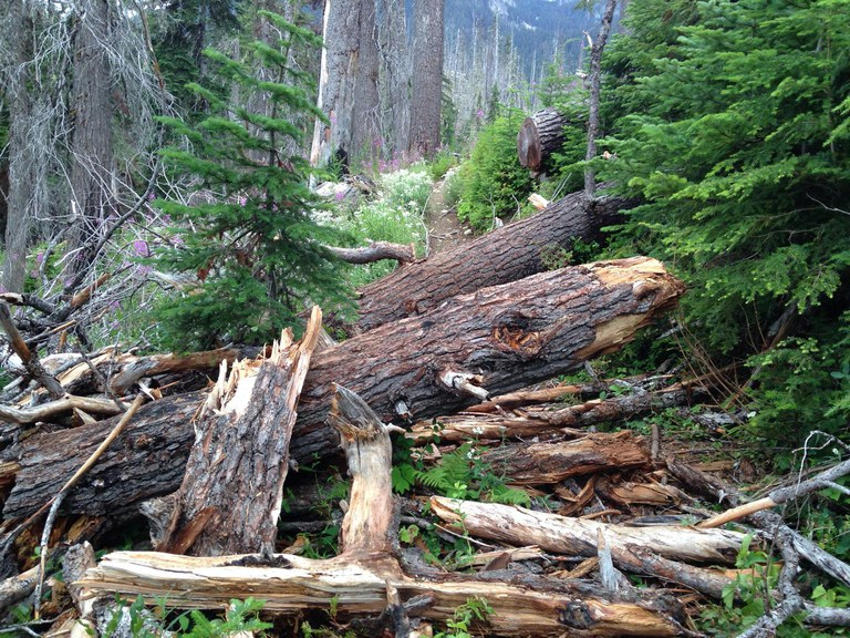 A pile of fallen logs and debris block the trail near Lemah Meadow along the PCT. Photo by Bob Zimmerman.