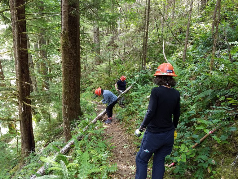Three trail volunteers work on cutting a fallen tree out of the trail. Photo by Dawn Rorvik.