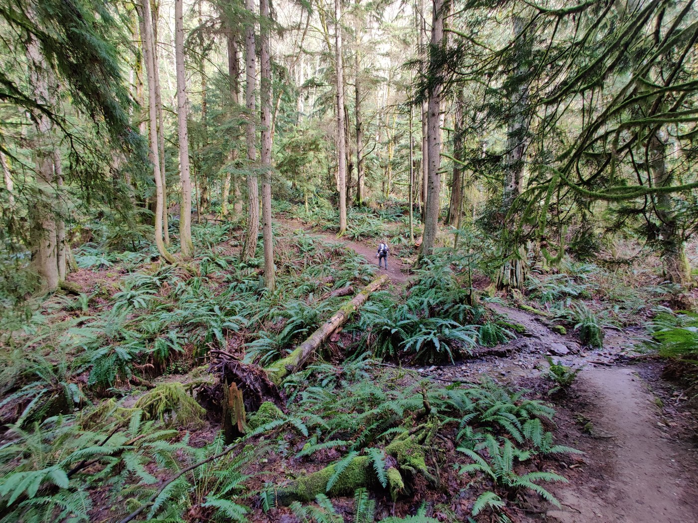 Lush forest surrounding the Margaret's Way trail.