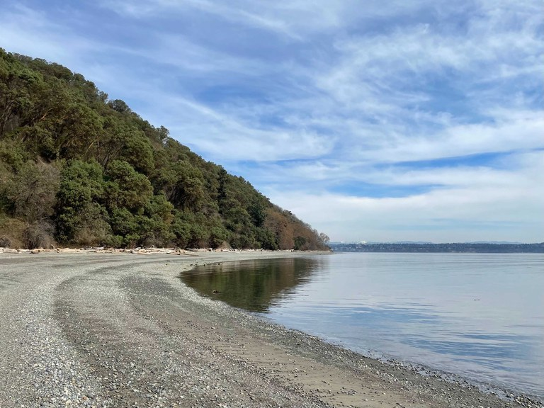 A curving stretch of beach bordered by forest.