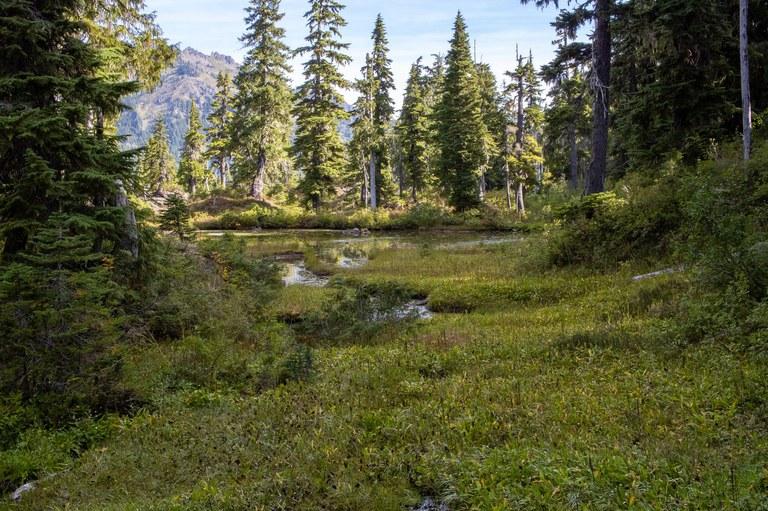 A tarn in a meadow.